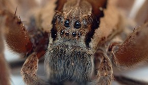 Basho's 5 Amazing Spider Encounters