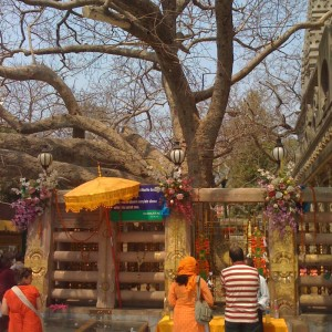 The Tree of Buddha's enlightenment